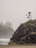 De bomen groeien op overzeese stapels bij zandig strand royalty-vrije stock afbeelding