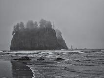 De bomen groeien op overzeese stapels bij zandig strand royalty-vrije stock fotografie