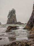 De bomen groeien op overzeese stapels bij zandig strand stock fotografie