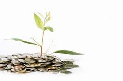 De bomen groeien van USD-concept de bedrijfsgroei als groei van bomen royalty-vrije stock afbeelding