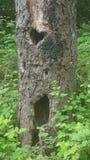 De bomen hebben ook ziel Stock Afbeelding