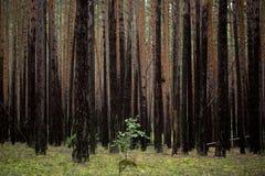 De bomen in het bos Stock Foto