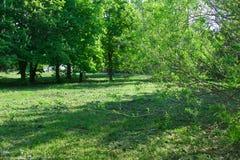 De bomen in het de lentepark, veel groen en zon Stock Fotografie
