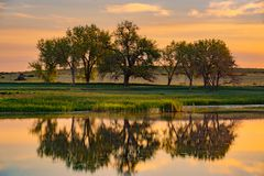 De Bomen & het Meer van Colorado bij Zonsopgang stock afbeelding