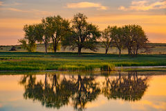 De Bomen & het Meer van Colorado bij Zonsopgang royalty-vrije stock foto