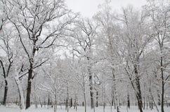 De bomen in het park zijn behandeld met sneeuw stock foto's