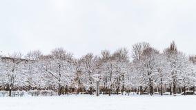 De bomen in het park zijn behandeld in sneeuw stock foto