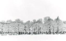 De bomen in het park zijn behandeld in sneeuw stock foto's