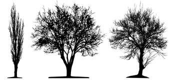 De bomen isoleted Royalty-vrije Stock Afbeeldingen