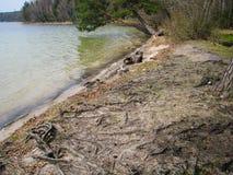 De bomen leunen over het water stock foto's