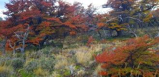 De bomen met de herfstkleuren en zetten Fitz Roy, Patagonië, Argentinië op stock fotografie