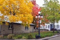 De bomen met kleurrijke bladeren, de herfst worden behandeld kwamen in Quebec dat Stock Foto