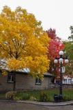 De bomen met kleurrijke bladeren, de herfst worden behandeld kwamen in Quebec dat Royalty-vrije Stock Afbeelding