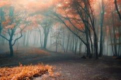 De bomen met rood doorbladert in een bos met mist Royalty-vrije Stock Foto's