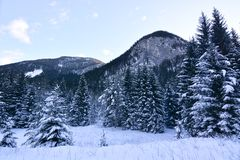 De bomen met sneeuw na de blizzard worden geladen die stock foto's