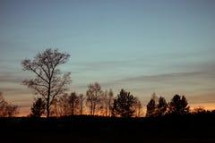 De bomen op de achtergrond van de avondhemel Royalty-vrije Stock Foto