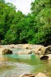 De bomen op de achtergrond van de rivier en de grote rotsen Royalty-vrije Stock Foto