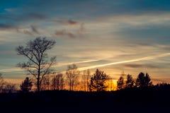 De bomen op de achtergrond van de zonsonderganghemel Royalty-vrije Stock Fotografie