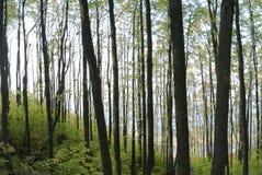 De bomen op de banken van de rivier Stock Foto's