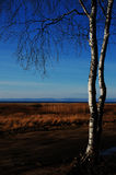 De bomen op de Beeroever van het meer Royalty-vrije Stock Foto