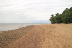 De bomen op de kust dichtbij het water voor ontwerp royalty-vrije stock afbeeldingen