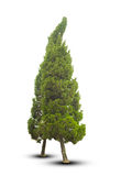 De bomen op witte achtergrond worden geïsoleerd die Royalty-vrije Stock Afbeelding