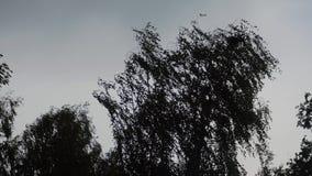 De bomen slingeren in de wind De orkaan begint De bomen zijn zichtbaar zoals silhouetten tegen de hemel Zeer Atmosferisch stock footage