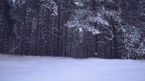 De bomen in sneeuw, lichte sneeuw valt, fabelachtig de winterbos bij nacht stock footage