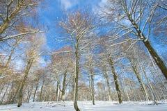 De bomen sneeuwden in Opakua Stock Foto