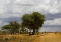 De bomen van Afrika Stock Afbeelding