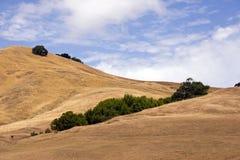 De Bomen van Californië van de Vallei van Sonoma royalty-vrije stock afbeeldingen
