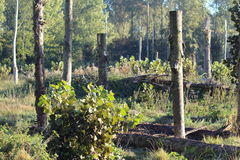 De bomen van Cutted Stock Foto