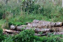 De bomen van Cutted Royalty-vrije Stock Foto