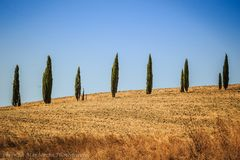 De bomen van Cyprus in Toscanië, Italië stock foto's