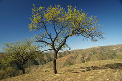 De bomen van de amandel in Alpujarra gebied, Spanje Royalty-vrije Stock Fotografie