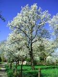 De bomen van de appel in de herfst Royalty-vrije Stock Foto's