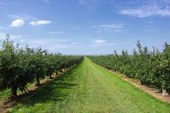 De bomen van de appel die met appelen in een boomgaard worden geladen Royalty-vrije Stock Afbeeldingen