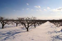 De bomen van de appel op de winter met blauwe wolken Royalty-vrije Stock Afbeeldingen