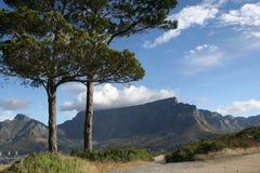 De Bomen van de berg Stock Foto