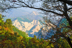 De bomen van de bergenschaduw Royalty-vrije Stock Afbeeldingen