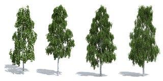 De bomen van de berk stock illustratie