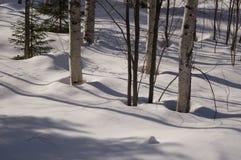 De bomen van de berk in sneeuw Royalty-vrije Stock Afbeeldingen