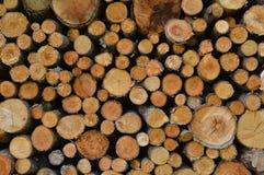 De Bomen van de besnoeiing Royalty-vrije Stock Fotografie