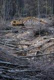 De bomen van de besnoeiing in een bos Royalty-vrije Stock Afbeelding