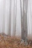 De Bomen van de beuk   stock afbeeldingen