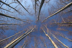 De bomen van de beuk - de herfst Stock Foto