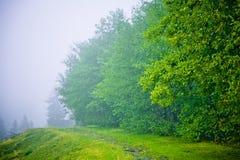 De bomen van de beuk in mist Royalty-vrije Stock Foto's