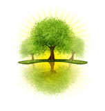 De bomen van de boomgaard Stock Foto