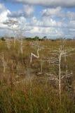 De Bomen van de cipres Stock Foto's
