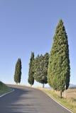 De bomen van de cipres bij het winden van landweg royalty-vrije stock foto's